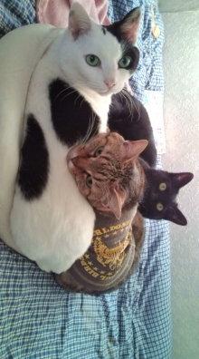 愛する猫ちんと船釣りと観光地めぐり-猫