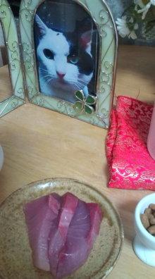愛する猫ちんと船釣りと観光地めぐり-あき
