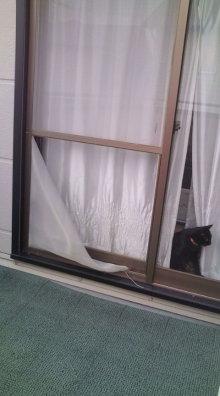 愛する猫ちんと船釣りと観光地めぐり-網戸