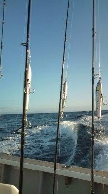 $愛する猫ちんと船釣りと観光地めぐり-海