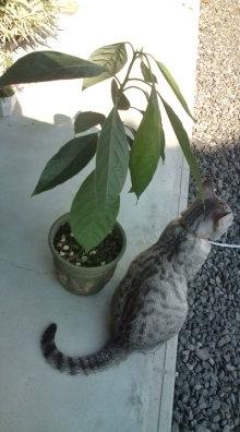 愛する猫ちんと船釣りと観光地めぐり-アボカド