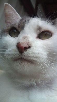 愛する猫ちんと船釣りと観光地めぐり-20111113111042.jpg