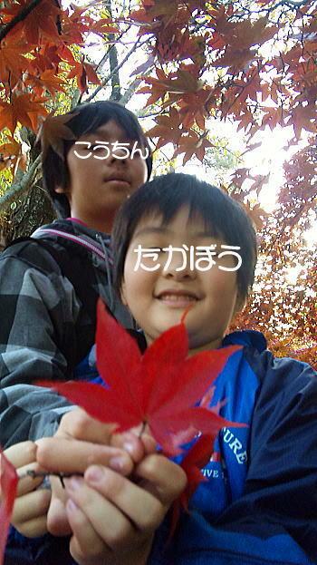 328_20101109112125.jpg