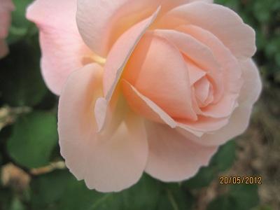 平和公園の花3