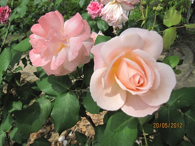 平和公園の花2