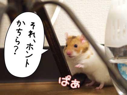 かよちゃん3