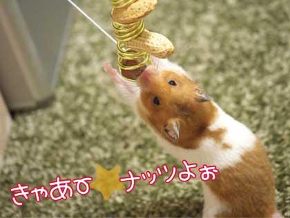 ナッツ食い