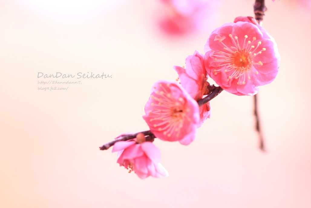 blog_7661.jpg