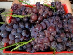 fruits201111.jpg