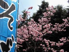 yamasyo01.jpg