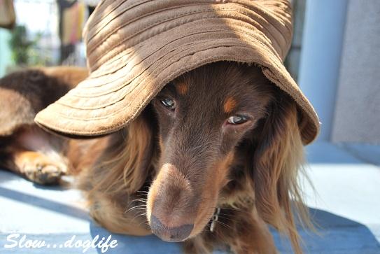 帽子どうよ?