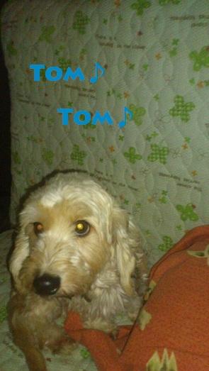トムトム♪