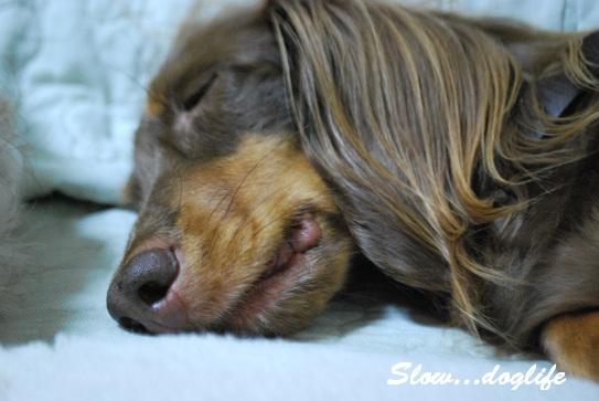 貫禄の睡眠