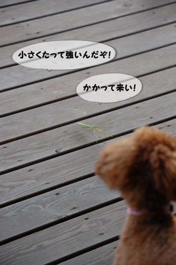 2_convert_20131117205814.jpg