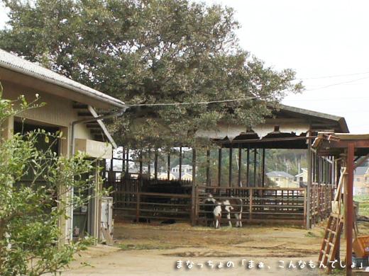 佐久間牧場 牛舎