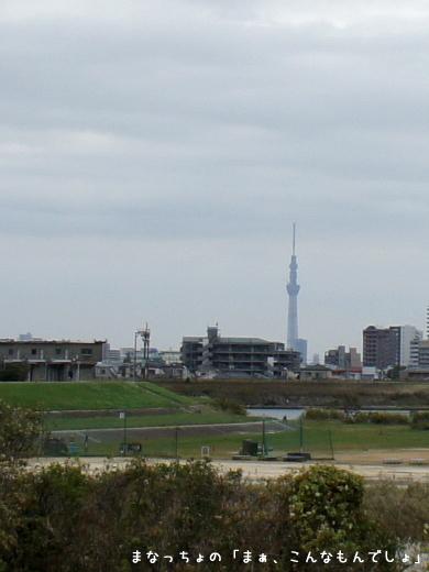 江戸川からみたスカイツリー
