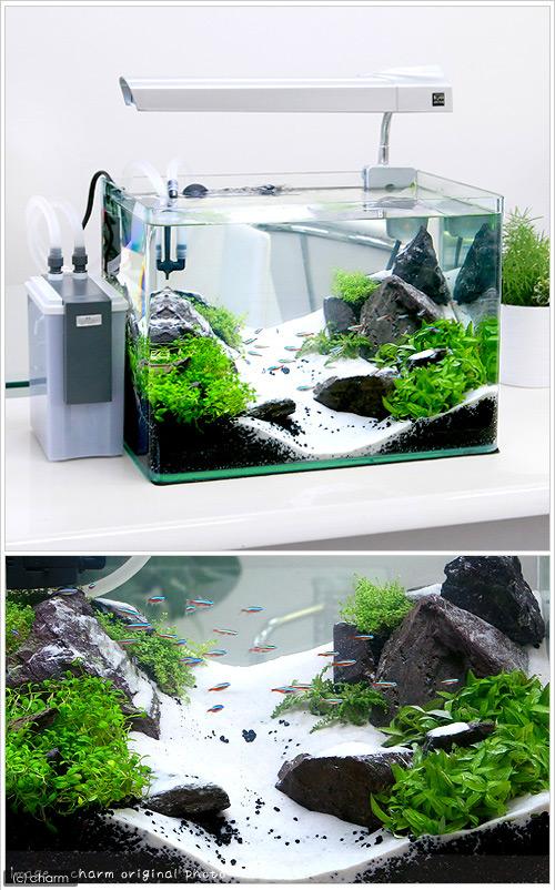 水槽 40 センチ 過密飼育に注意 熱帯魚を水槽に入れすぎていませんか・最適な匹数とは 東京アクアガーデン