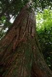 IMG_6084杉