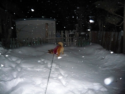 雪が降ろうと…