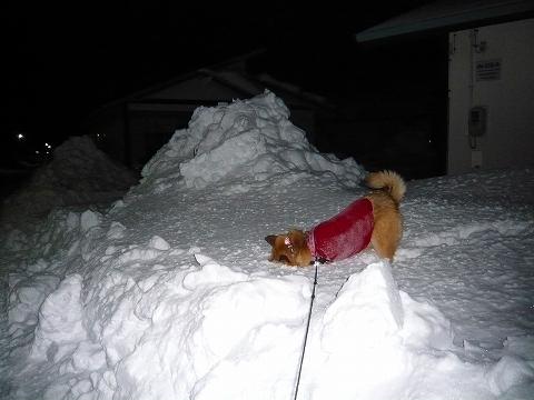 新雪だろと…