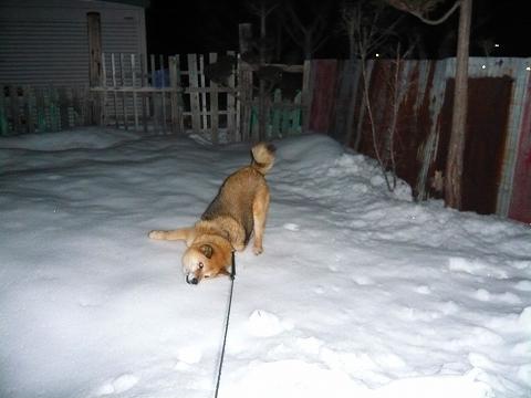 硬くなった雪だろうと…