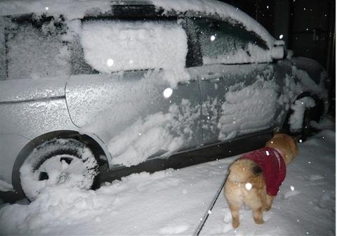 雪、降れるね~