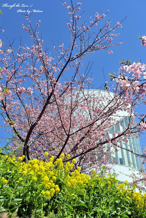 河津桜とハーブガーデン