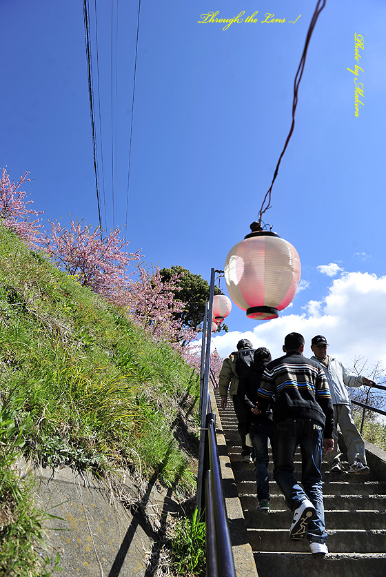 松田山へ3