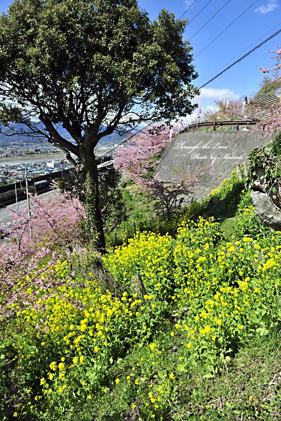 松田山へ6