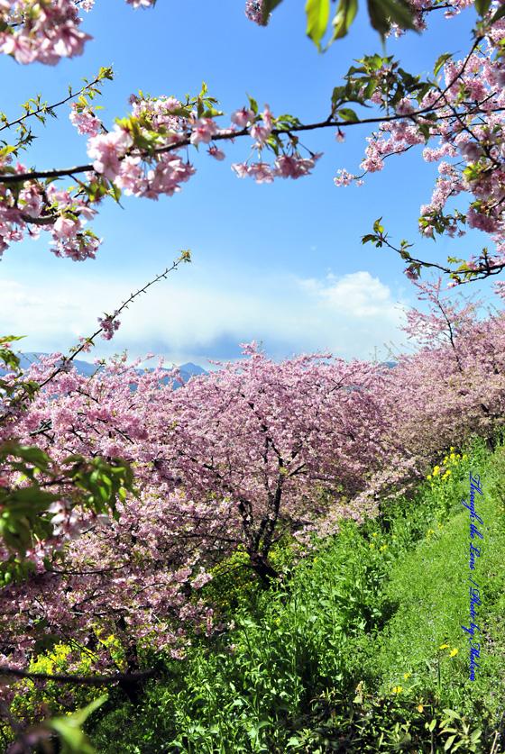松田山へ11