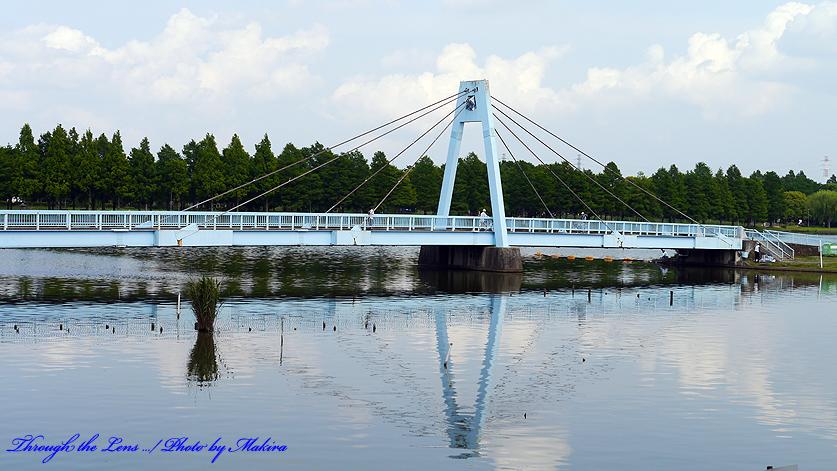 公園内に架かる橋