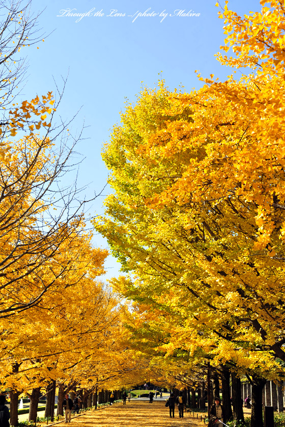 カナール銀杏並木6