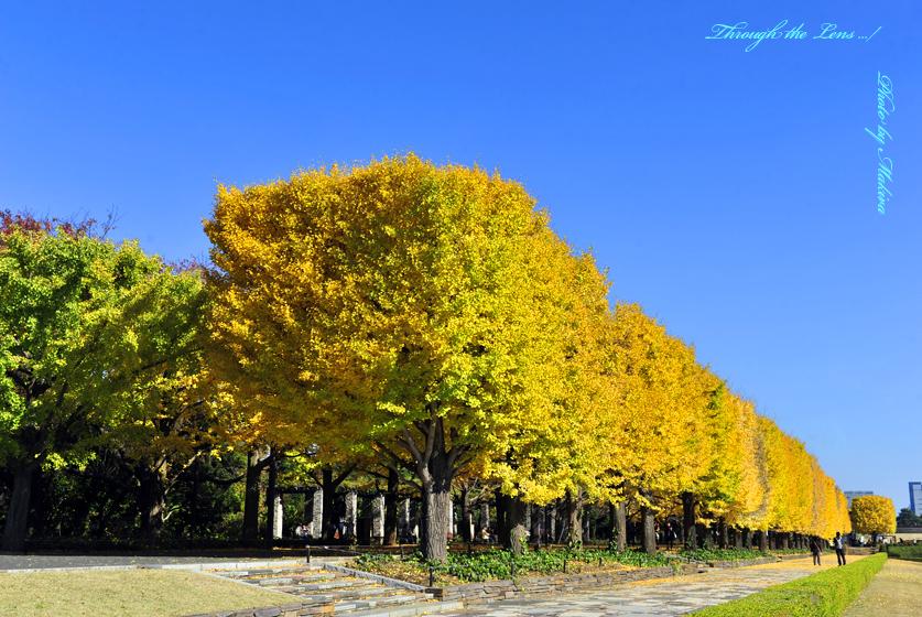 カナール銀杏並木1