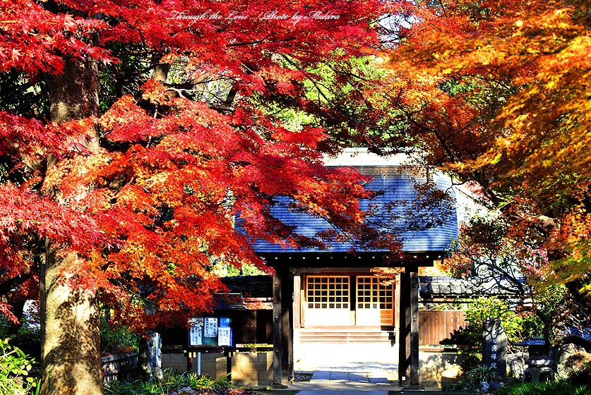 興禅院入口2
