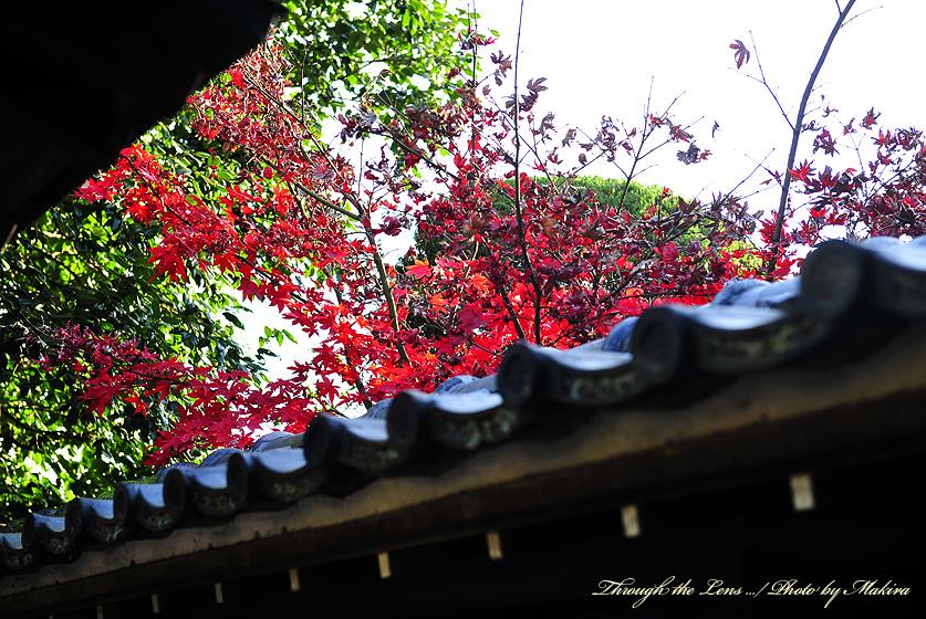 興禅院出口紅葉3