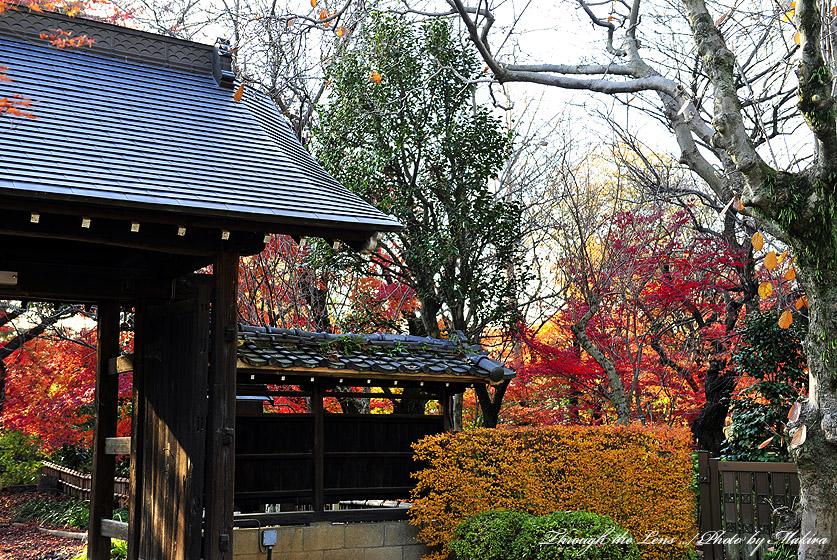 興禅院出口紅葉2