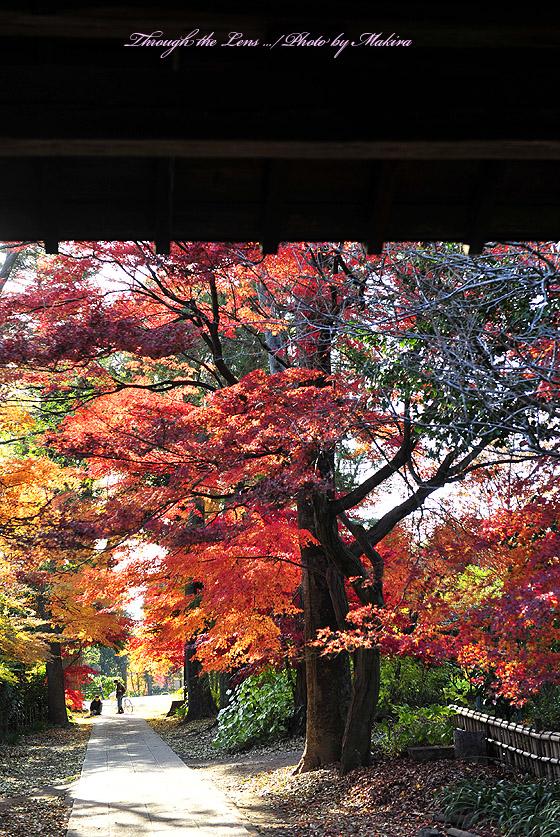 興禅院出口紅葉4