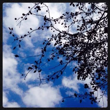 空と風が秋を感じさせてくれます。