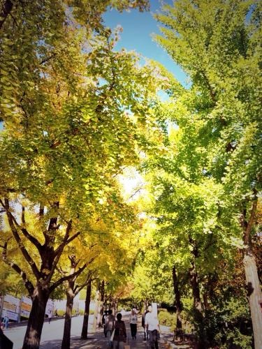 秋の風景はあっという間です。