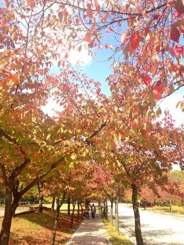 漢陽大学エリカキャンパス。うっとりするほど秋の色に。