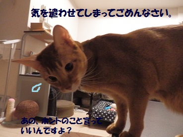 PC012984.jpg