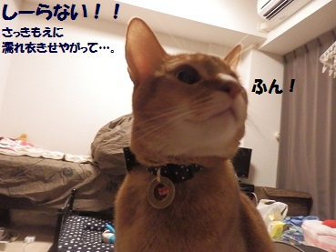 PC093132.jpg