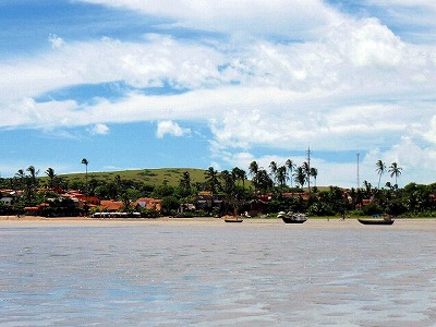 brasil-ジェリコアコアラ