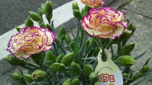 201205_hhanohi_pafe01.jpg
