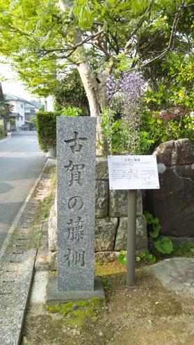 koga_fujidana0001.jpg