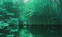 深緑水面3壁紙