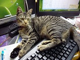 chibi-P1030511.jpg