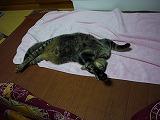 chibi-P1030835.jpg