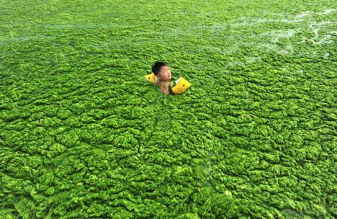 a-child-swims-in-algae-filled-coastline-of-qingdao-shandong-301624148_20110721195959.jpg