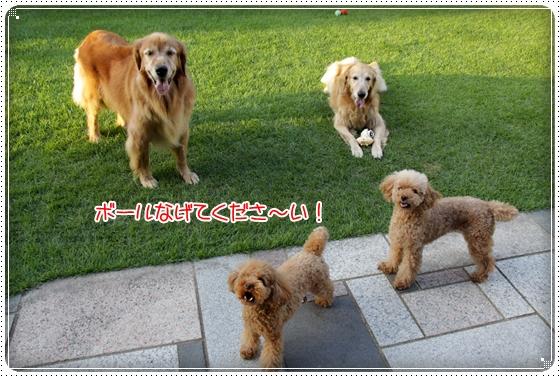 2010,9,3お庭遊び2